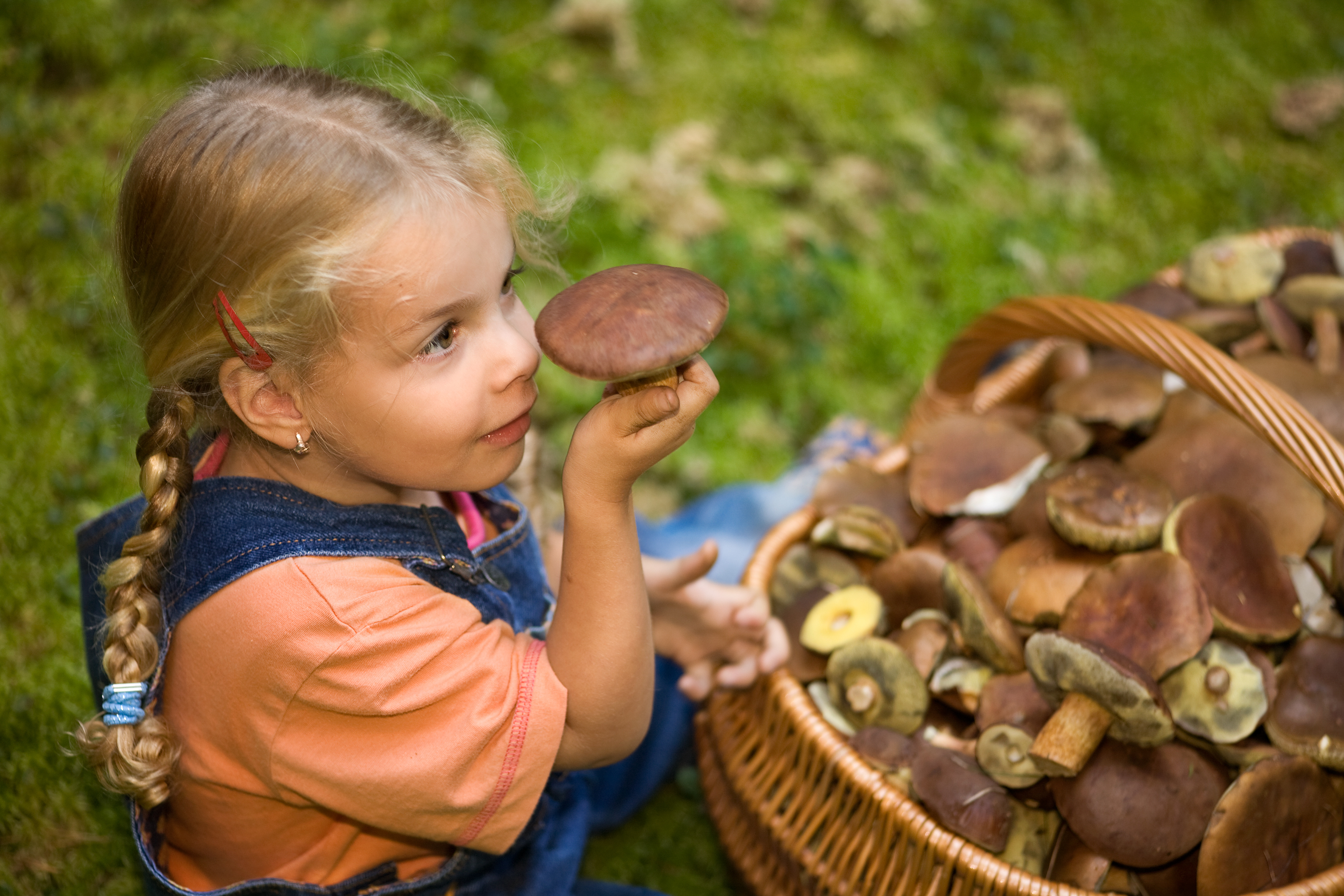 Картинка дети и грибы
